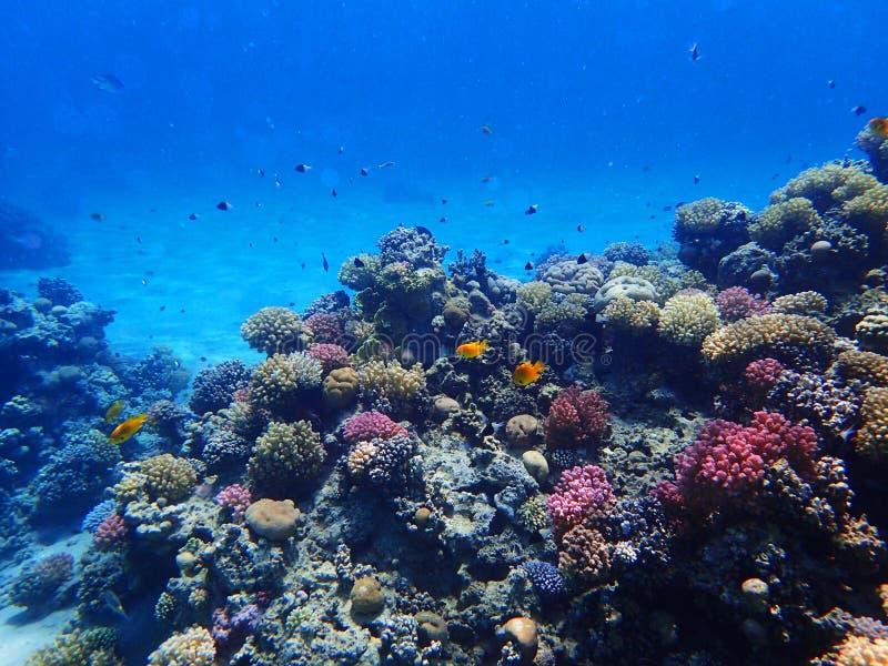 Barriera corallina nell'egitto immagini stock libere da diritti