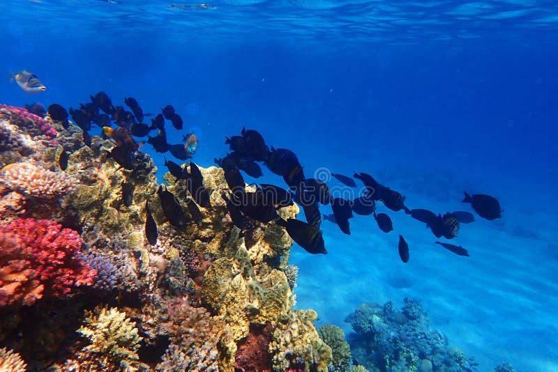 Barriera corallina nell'egitto immagine stock