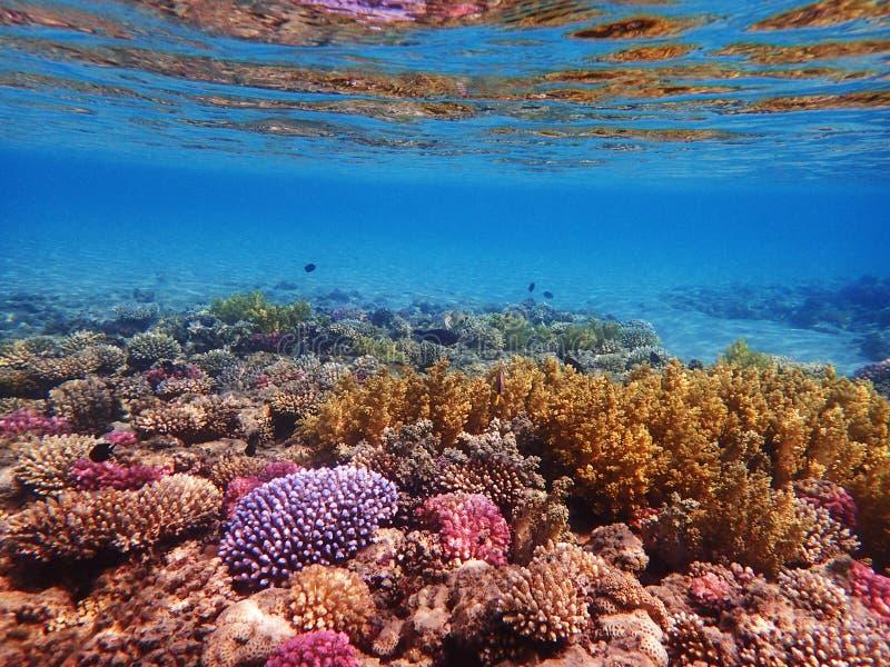 Barriera corallina nell'egitto fotografia stock libera da diritti