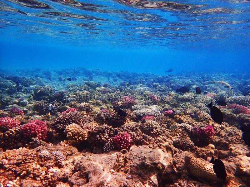 Barriera corallina nell'egitto immagine stock libera da diritti