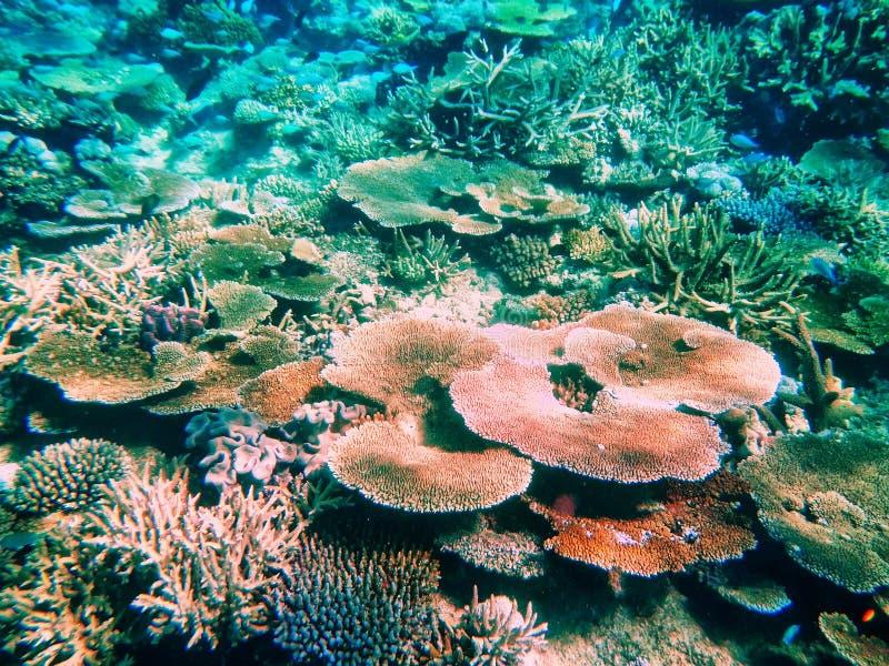 Barriera corallina nello stretto di Somosomo fuori dalla costa dell'isola di Taveuni, F immagine stock