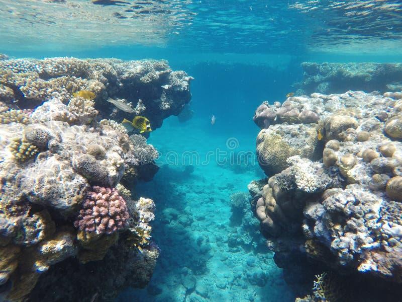 Barriera corallina stupefacente bella, molto pesce fotografia stock
