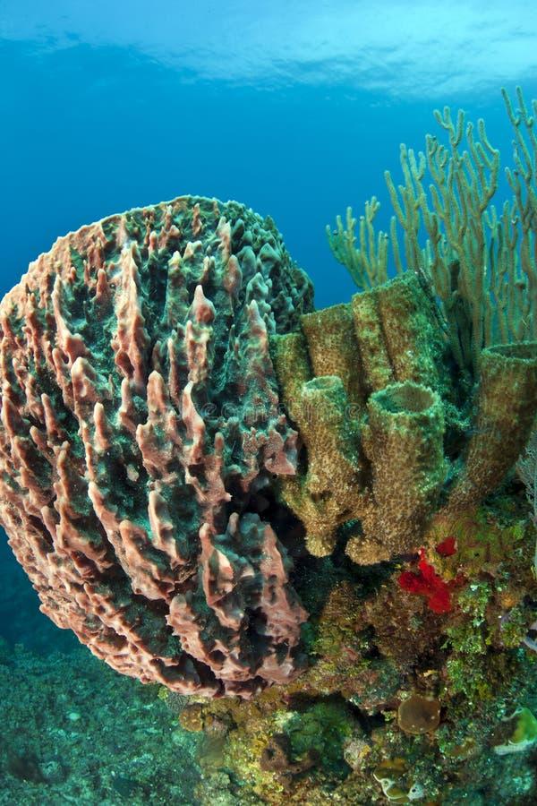 Barriera corallina subacquea immagine stock