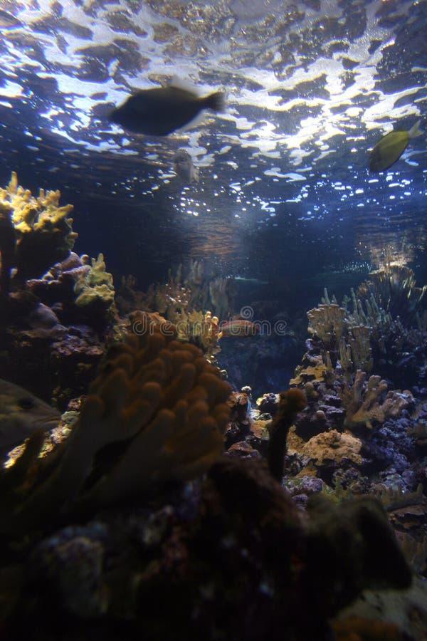 Barriera corallina subacquea immagini stock