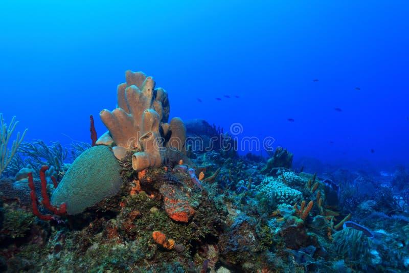 Barriera corallina tropicale fotografia stock