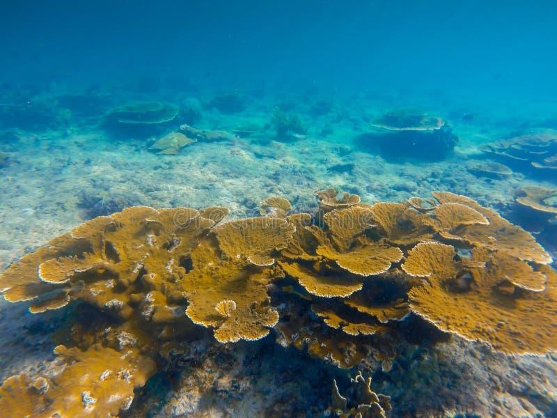 Barriera corallina Underwater caraibica, paesaggio subacqueo immagini stock libere da diritti