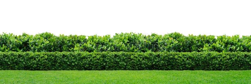 Barriera verde immagine stock libera da diritti
