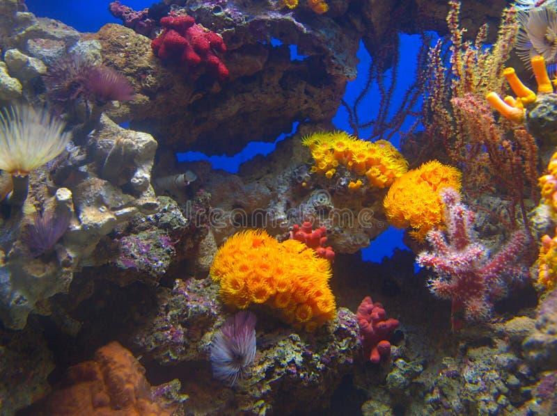 Barriere coralline fotografia stock