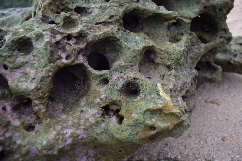 Barriere coralline sulla spiaggia immagini stock