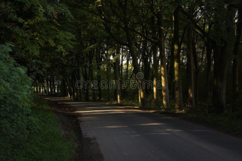 Barriere scure identiche con gli alberi di faggio maturi che fondono tonalità pesante sopra una strada secondaria fotografia stock libera da diritti