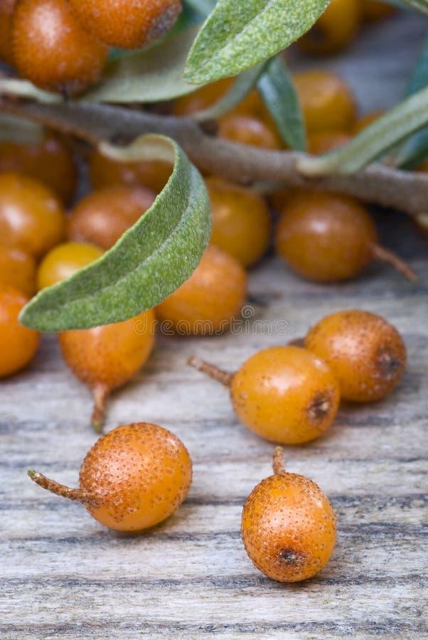 Barries dell'olivello spinoso (ramnoidi di Hippophae) fotografie stock libere da diritti