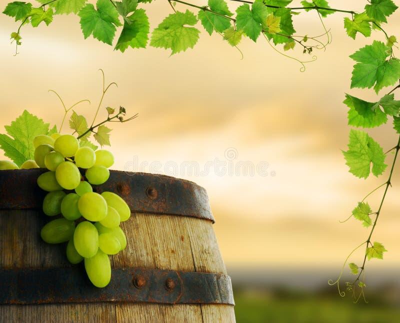 Barril de vino con la uva y la vid fotos de archivo