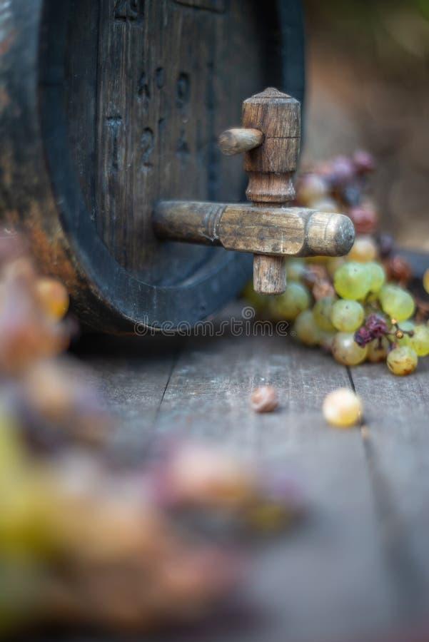 Barril de vino con las uvas blancas el la estación de la cosecha imágenes de archivo libres de regalías