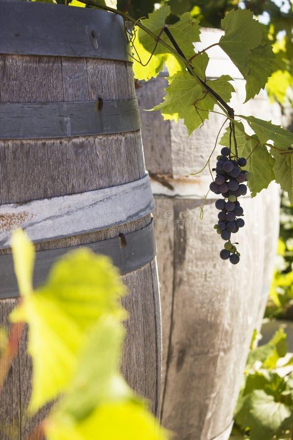 Barriles de vino alineados en un lagar foto de archivo libre de regalías
