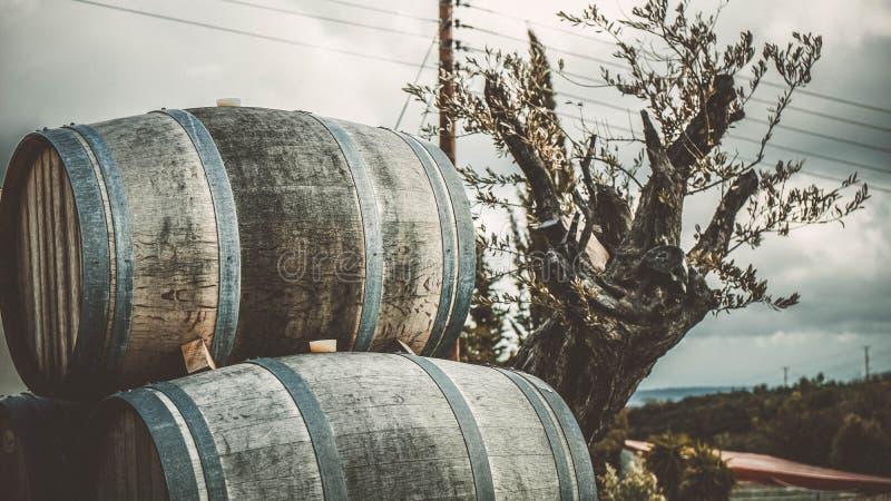 Barriles de vino para alrededor la planta en Chipre Europa foto de archivo libre de regalías