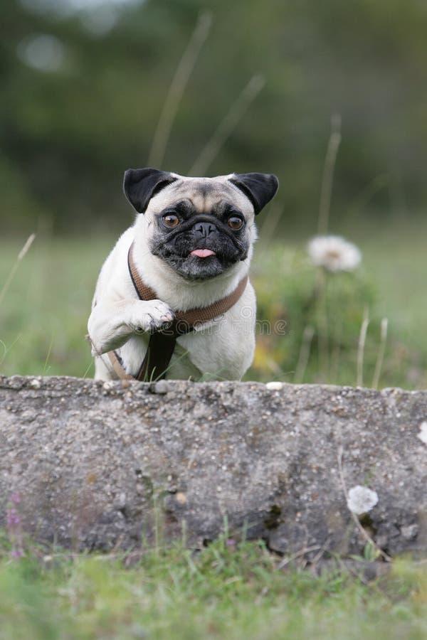 Barro amasado de salto foto de archivo