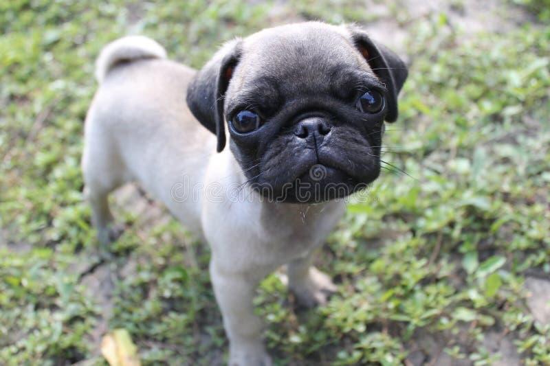 Barro amasado del perrito imagen de archivo libre de regalías