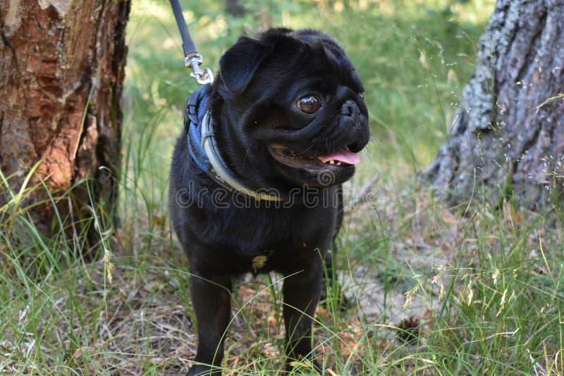 Barro amasado negro del perrito imágenes de archivo libres de regalías