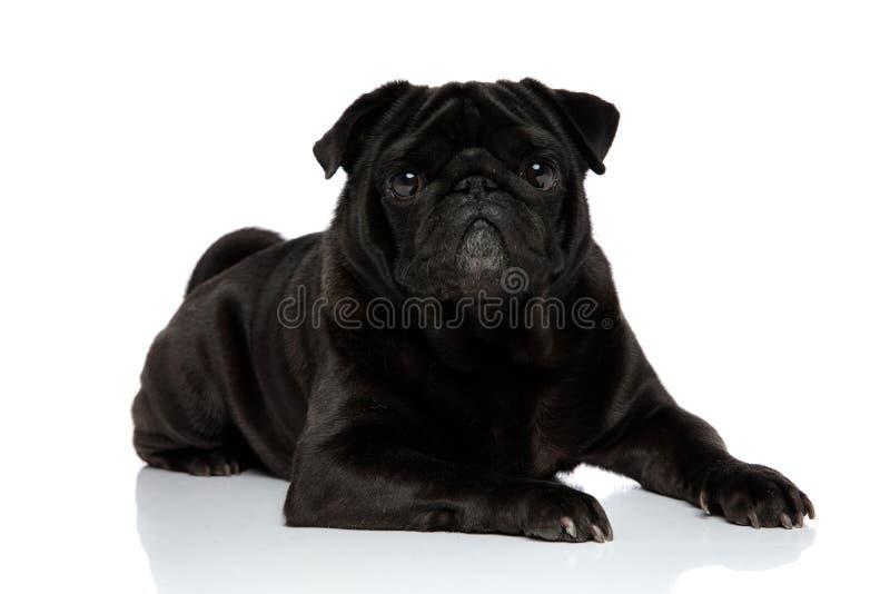 Barro amasado negro encantador que mira a la c?mara imagen de archivo