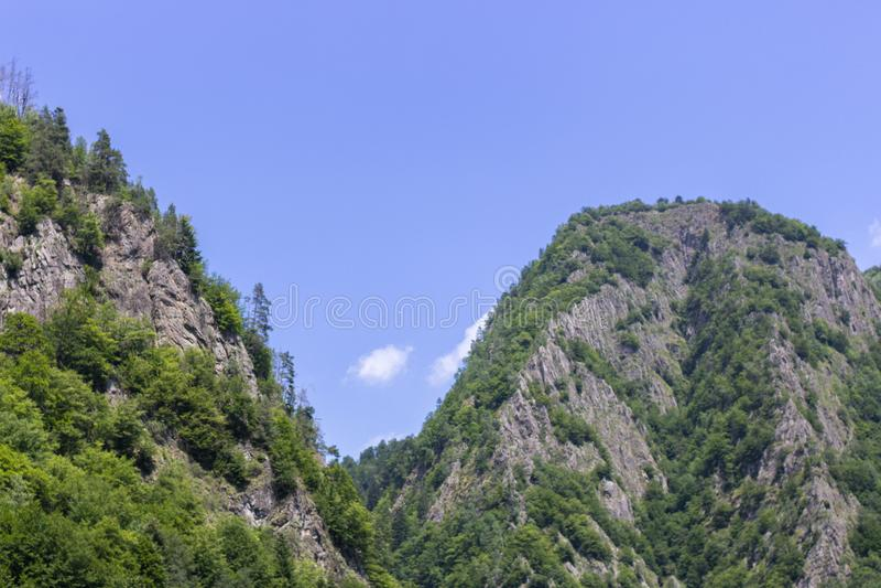 Barrskog på höga berg royaltyfri bild
