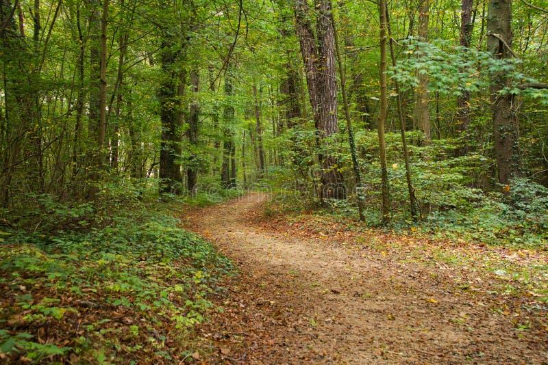 barrträds- östligt ukraine för Europa skogbana trä arkivfoton