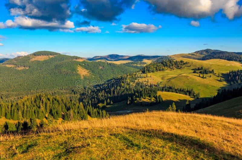Barrträdskog i klassiskt dallandskap för Carpathian berg fotografering för bildbyråer