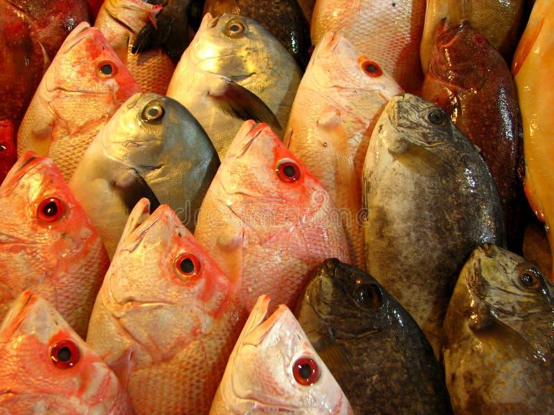 Bars de mer ou poissons frais de mérou photos libres de droits