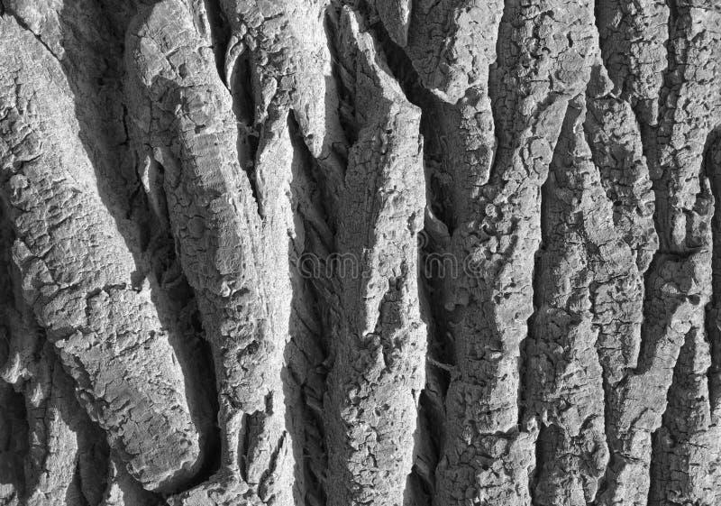 Barst op een fragment van de schors van een oude boom stock foto