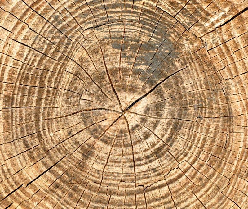 Barsten en jaarringen op de zaagbesnoeiing van oude boomachtergrond stock foto's