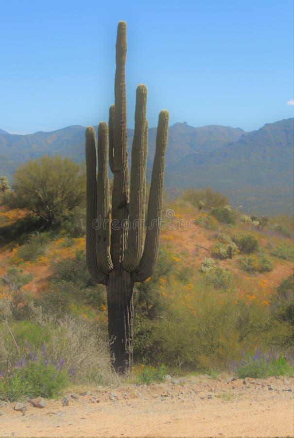 Bartlett Lake-reservoir, Maricopa-Provincie, Staat toneel het landschapsmening van van Arizona, Verenigde Staten stock foto's