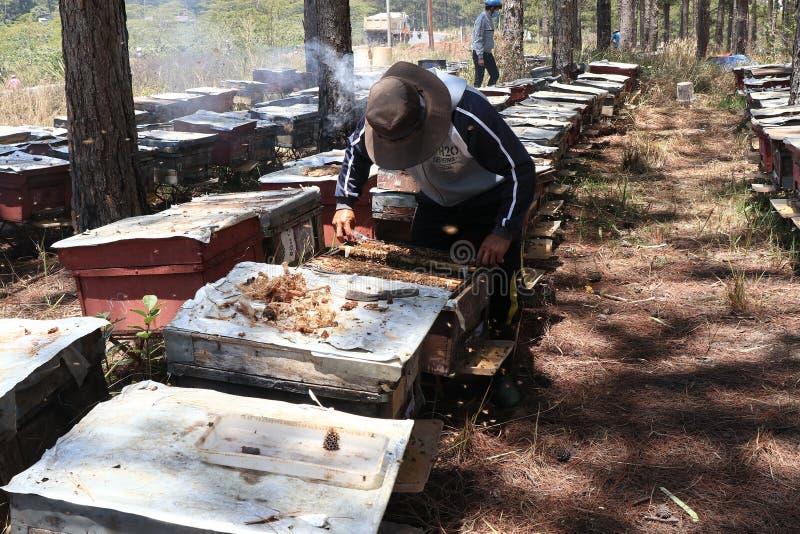 Bartniczy działanie na pszczoły gospodarstwie rolnym obrazy stock