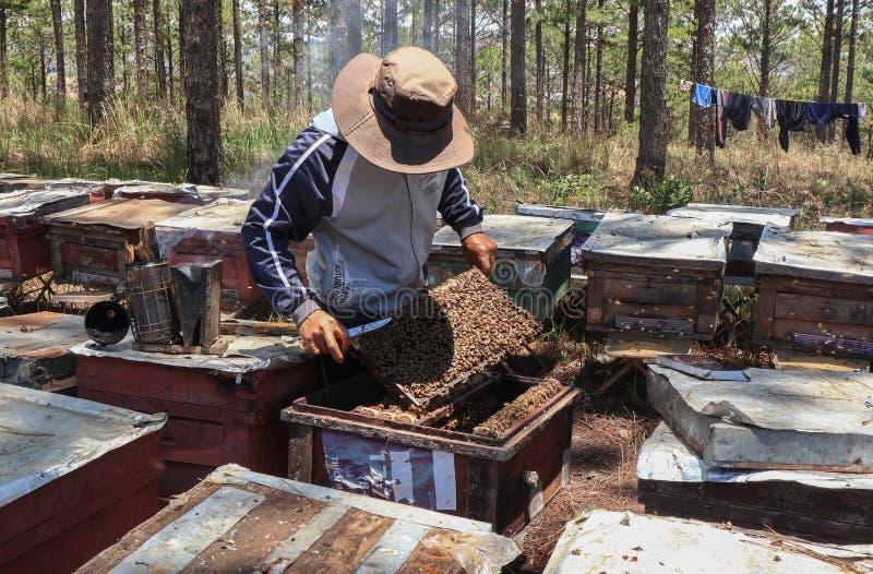 Bartniczy działanie na pszczoły gospodarstwie rolnym zdjęcia royalty free