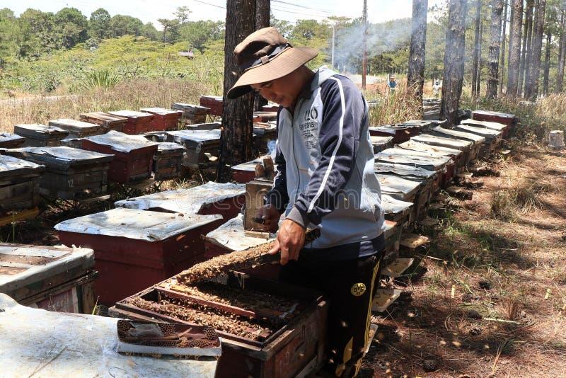 Bartniczy działanie na pszczoły gospodarstwie rolnym obrazy royalty free