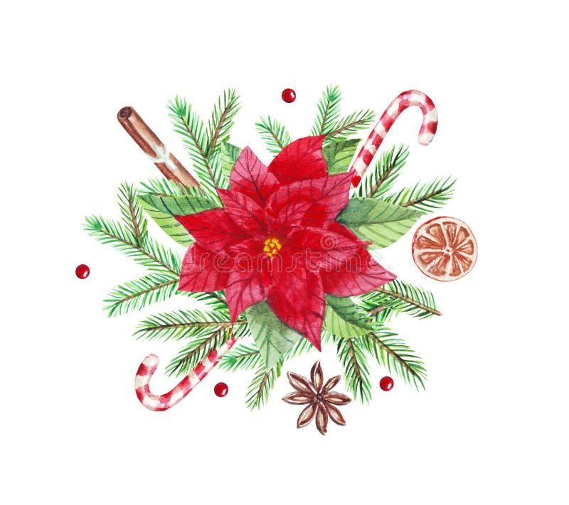 Barwa wodna, układ bożonarodzeniowy z zielonymi fiołami i kwiatami punsetia, cynamon, cukierki, kardamon izolowany na białym ilustracja wektor