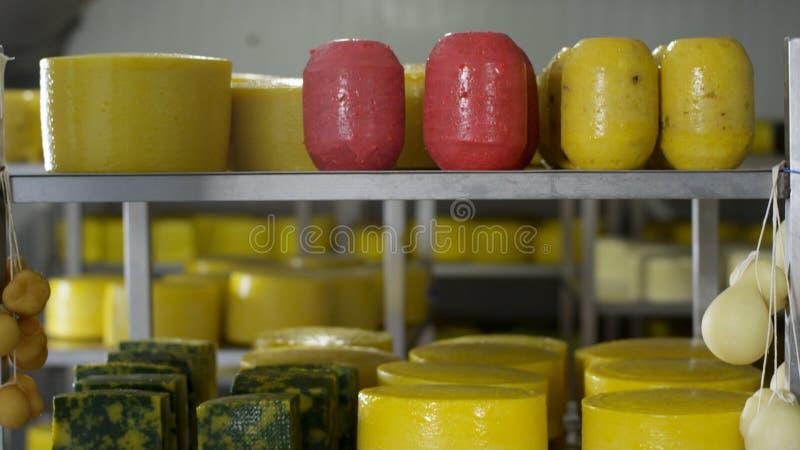 Barwiący sery różni stopnie na półkach scena Serów koła na półce Głowy naturalny organicznie domowej roboty fotografia stock