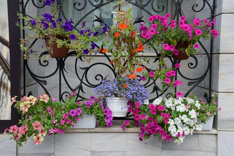 Barwić kwiatonośne rośliny w garnkach zdjęcie stock