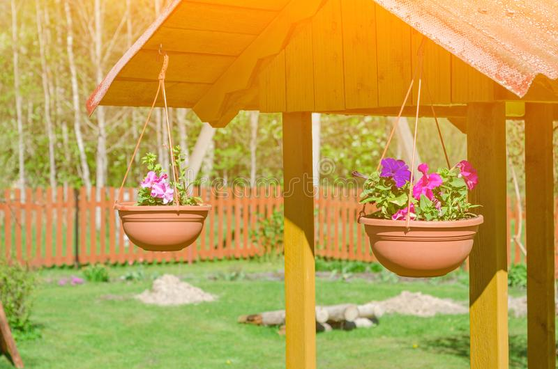Barwić petunie w garnkach Oryginalna dekoracja dla well zdjęcia stock
