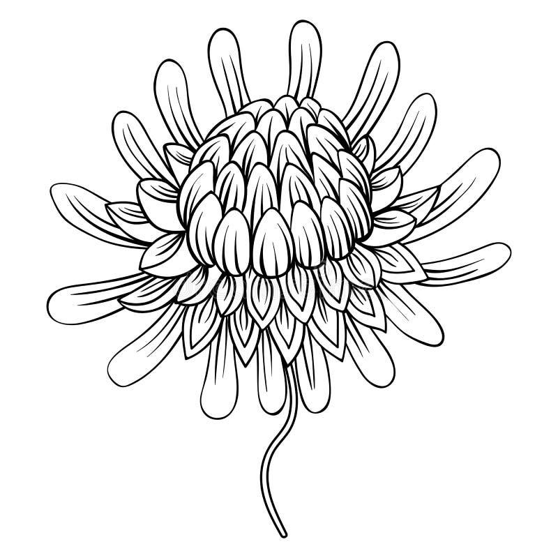 Barwić stronę z Etlingera kwiatami, pochodnia imbir, Filipińczyk W royalty ilustracja