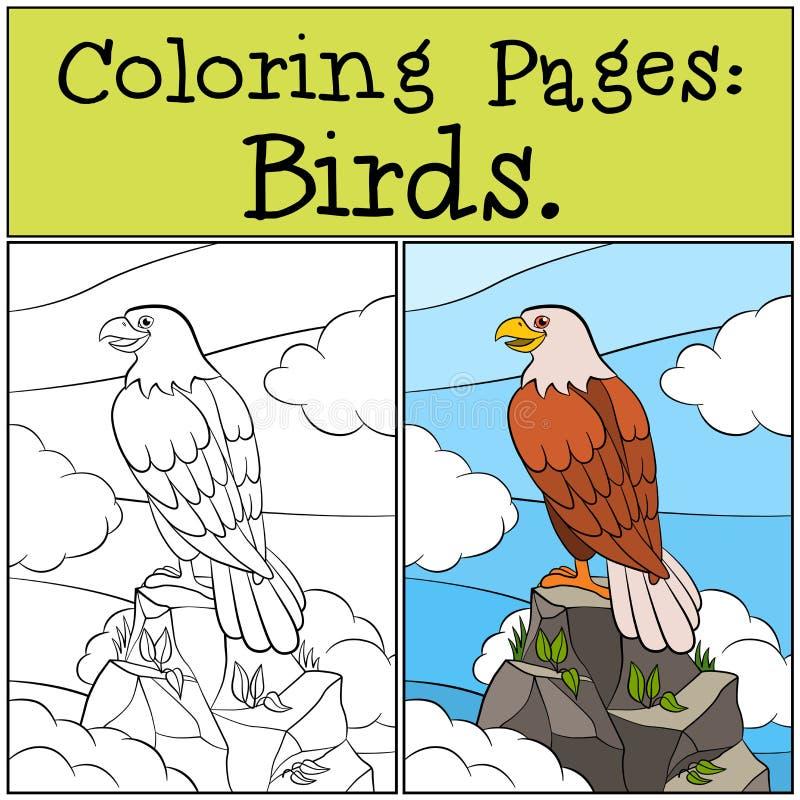 Barwić strony: Dzicy ptaki Śliczny śmiały orzeł siedzi na skale i ilustracji