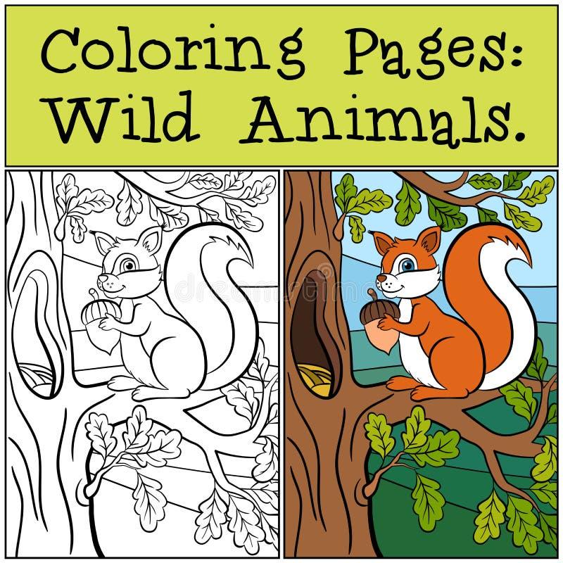 Barwić strony: Dzikie Zwierzęta Mała Śliczna wiewiórka royalty ilustracja