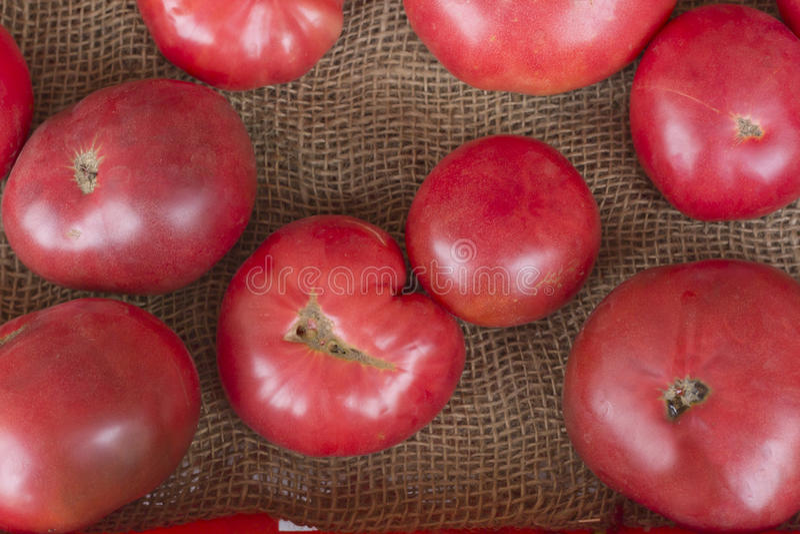 barwi heirloom czerwonego pomidorów kolor żółty zdjęcie stock