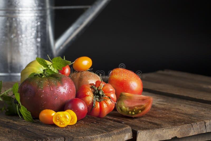 barwi heirloom czerwonego pomidorów kolor żółty obrazy stock