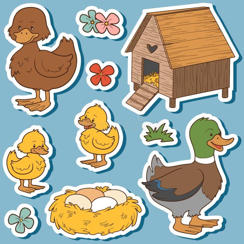 Barwi set śliczni zwierzęta gospodarskie i przedmioty, wektorowa rodzinna kaczka ilustracja wektor