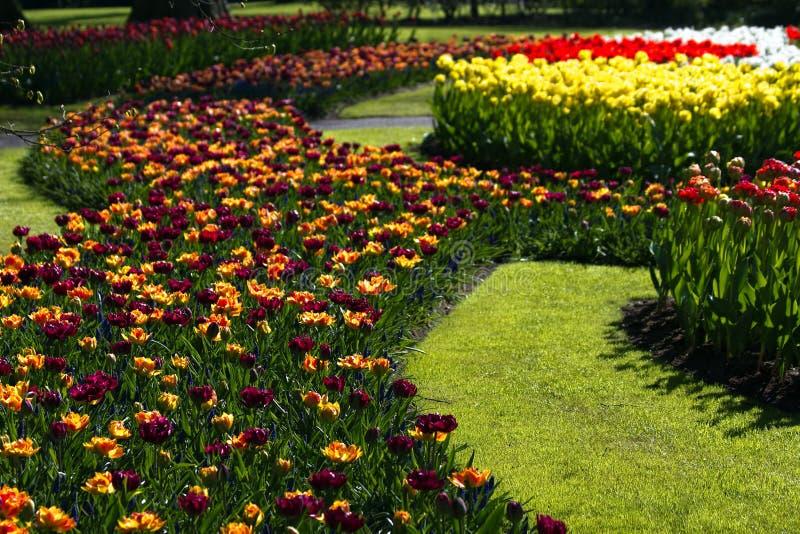 barwi wiosna wiele tulipany obraz stock