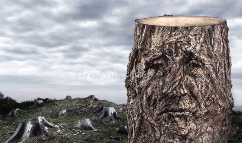 barwiarscy drewna fotografia royalty free