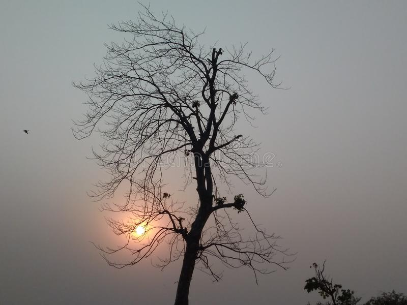 BARWIARSKI drzewo I położenia słońce zdjęcia stock