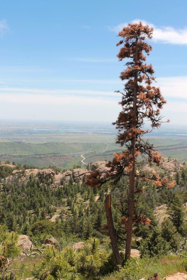 Barwiarski drzewo Przeciw zieleń krajobrazowi fotografia royalty free