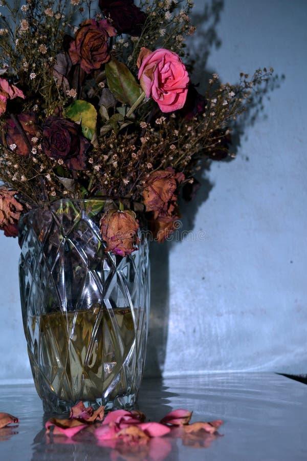 Barwiarskie róże zdjęcie royalty free