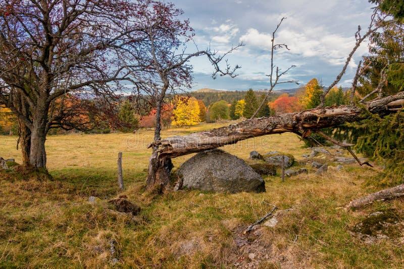 Barwiona jesień w pięknym Czeskim parku narodowym Sumava, Europa - zdjęcia stock