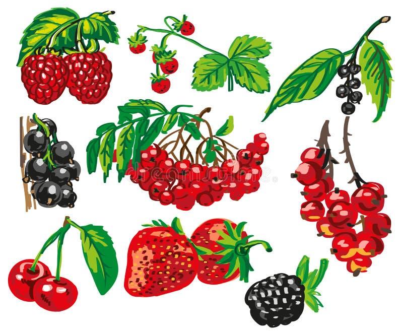 Barwione jagody na białym tle royalty ilustracja